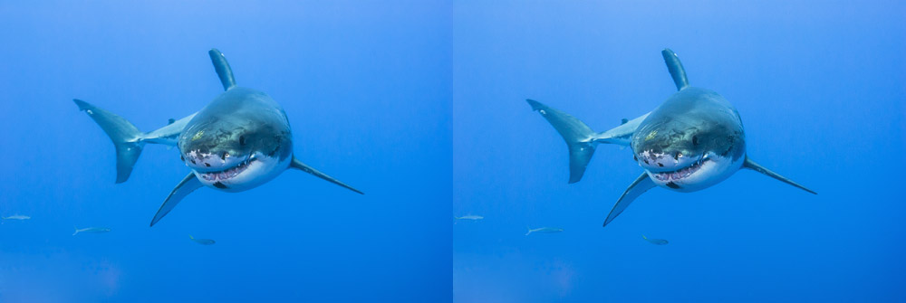 shark before and after